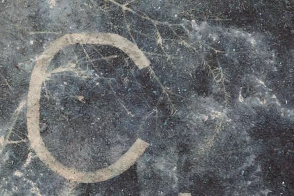 Saprophyte VIII (detail). 55cm x 80 cm