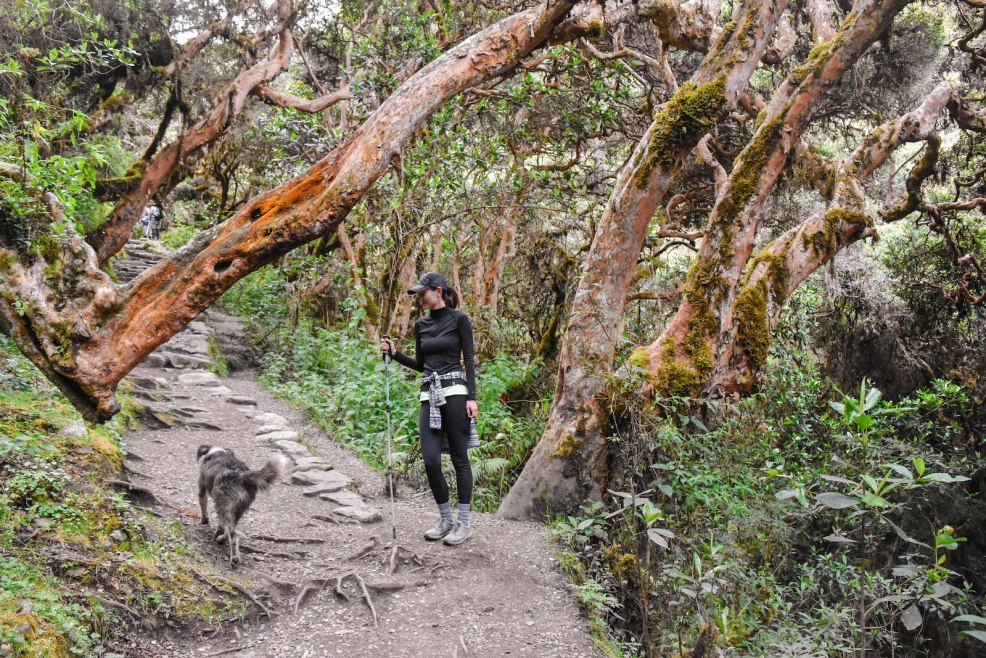 hiking through cloud forests on the Inca trail to Machu Picchu