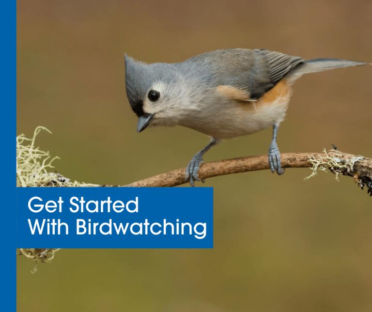 Get Started with Birdwatching blog header