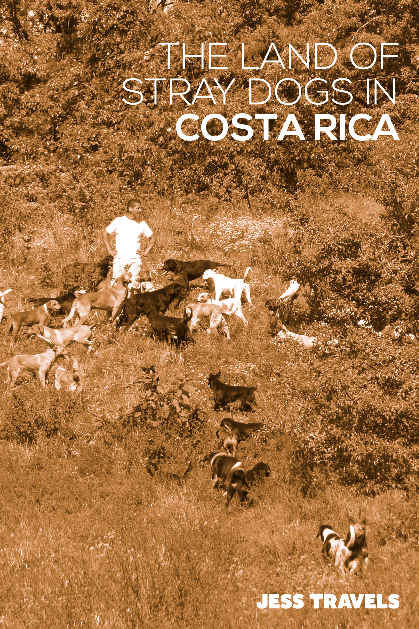 The Land of Stray Dogs in Costa Rica. How to visit, where is it? and what is it like to be surrounded by hundreads of friendly dogs! #CostRica #TravelCostaRica #dogs