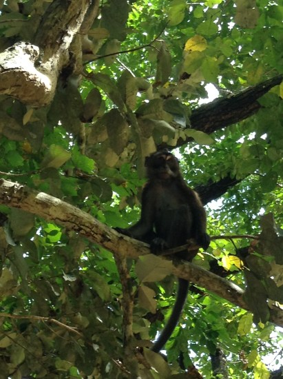 Monkeys watch over you as you wait for your boat to the river