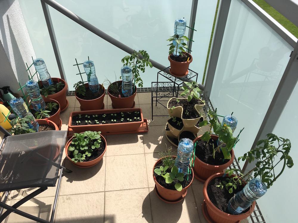 Zajmowanie się warzywami na balkonie