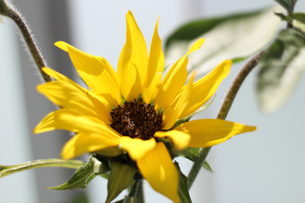 Przegląd roślin, czyli lato na balkonie