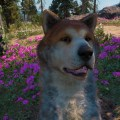 Timber, mon p'tit pote à quatre pattes dans Far Cry New Dawn