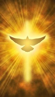 BEAR FRUIT OF THE SPIRIT OF CHRIST - JesusLiftedup com