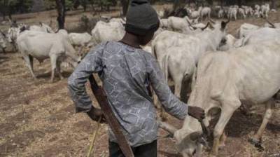 BREAKING: Fulani herdsmen strike again in Igangan, machete farmer to point of death