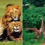La homosexualidad en los animales