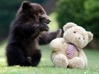 bear-cub-playing-with-teddy-bear