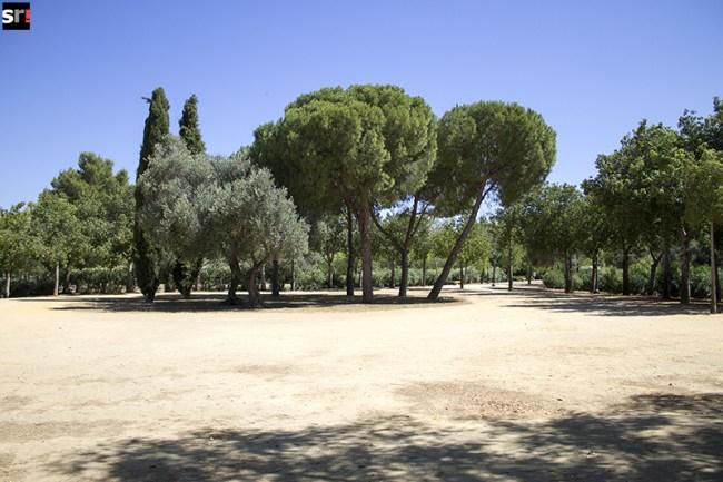 Pradera seca en el Parque Amate de Sevilla