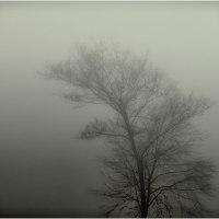 Nebel - Bild 250/365