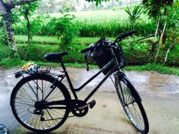stranded in the rice fields - bike - Ubud Bali