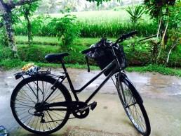 stranded in the rice fields - bike - Ubud Bali