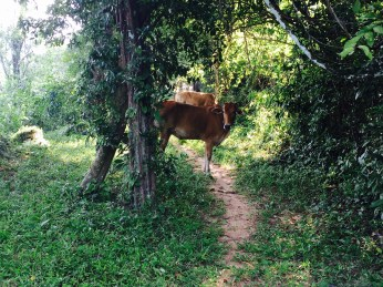 Angkor hidden trail