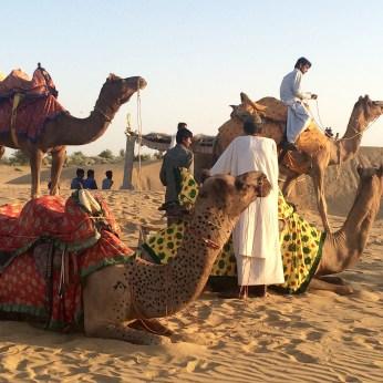 camels-thar-desert-india