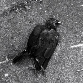 Der Tod im Leben