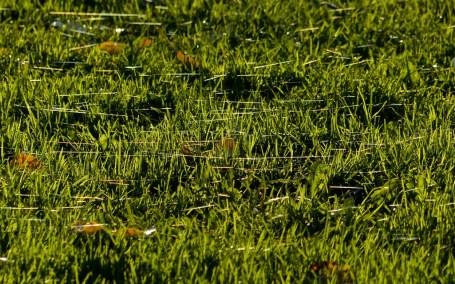 Spinnenlabyrinth