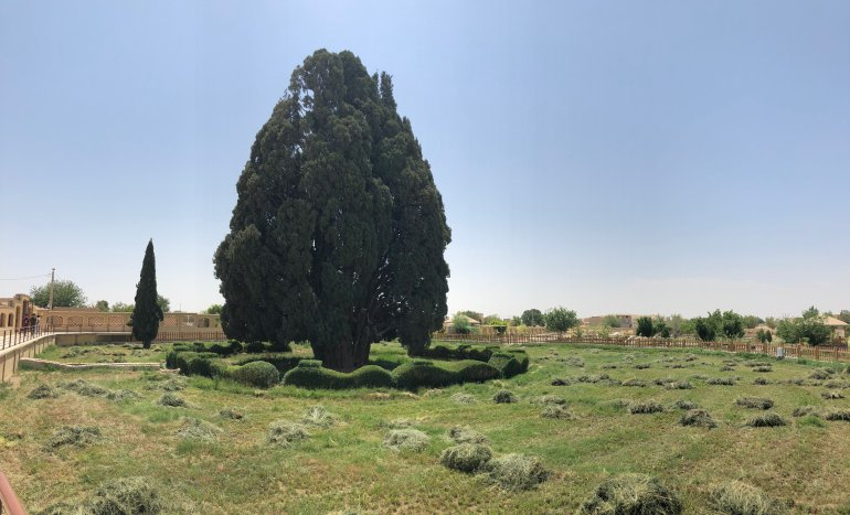 cypress tree iran