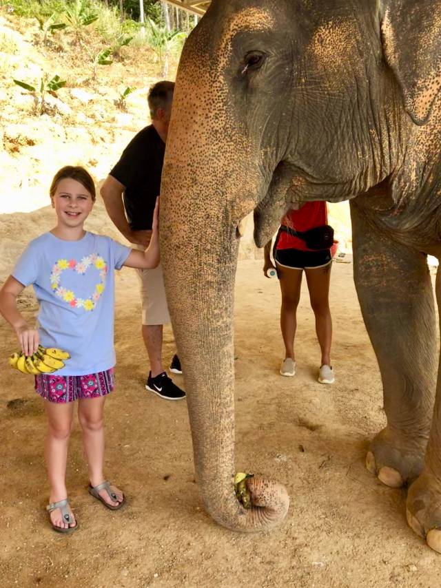 Visit an elephant sanctuary in Thailand. The best places to visit in Southeast Asia
