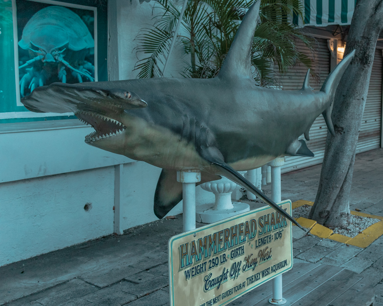 Picture of a shark statue outside of the aquarium.
