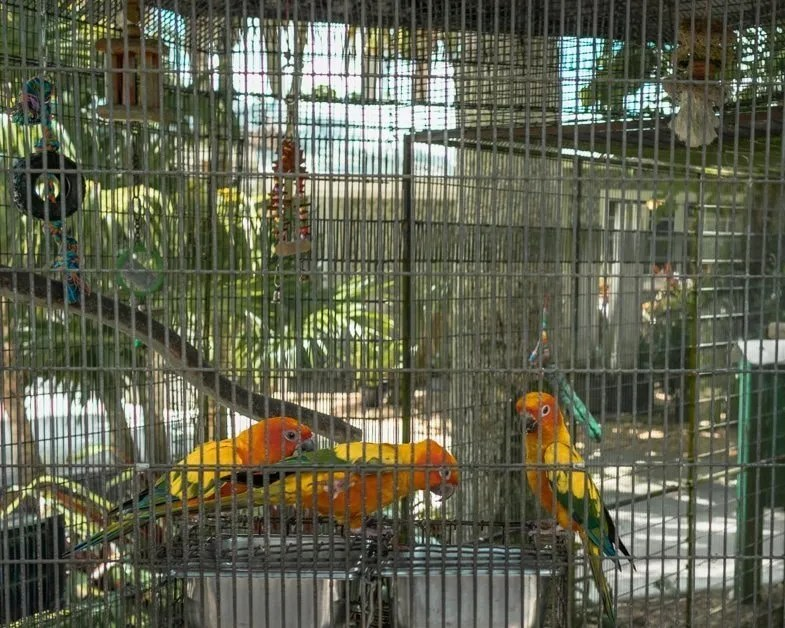 3 colorful birds eating at the Flamingo Gardens.