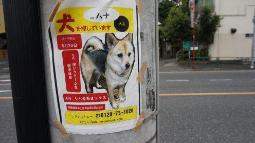 komae-tokyo-photo-16