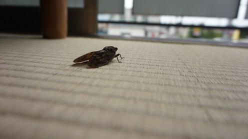 komae-tokyo-photo-63