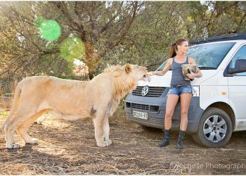 ©Rochelle Photography - the gorgeous Sharine and her pride @ Bagamoya Wildlife Estate Bloemfontein South Africa