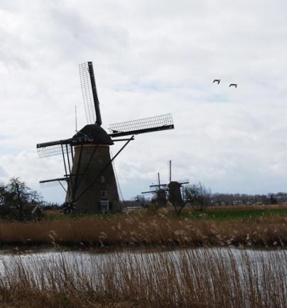 Kinderdijk-Rotterdam-44