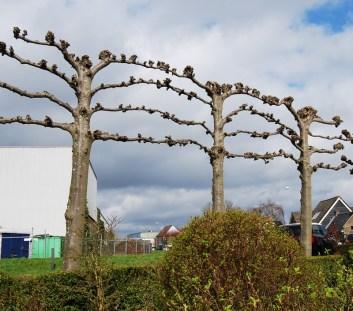 Kinderdijk-Rotterdam-51