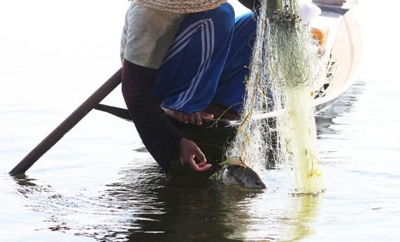 Fishermen of Inle Lake 31