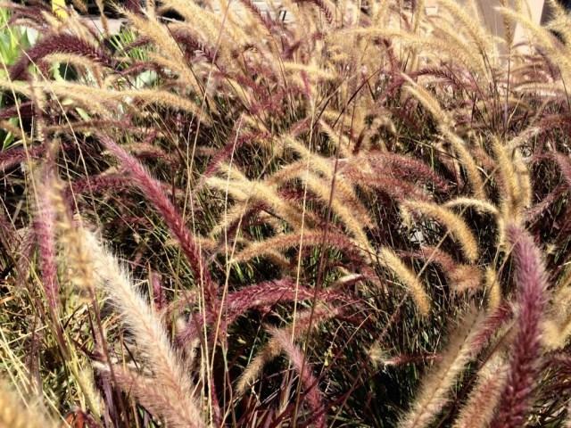 Blades + Bushes | Drought-Friendly Plants #EveryDrop