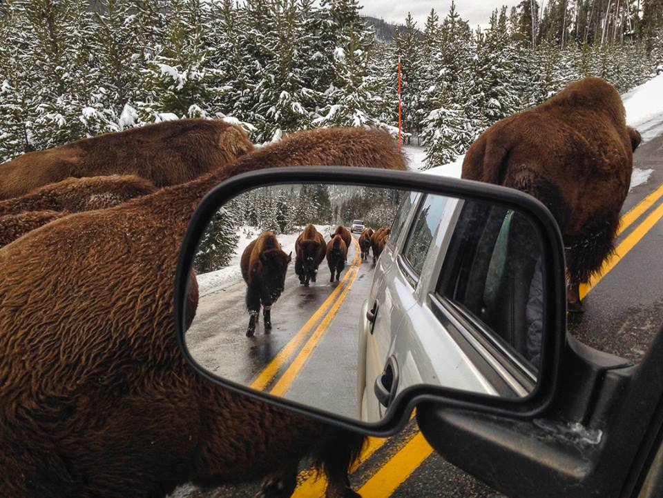 Avoiding The Crowds In Yellowstone! 5 Places Off The Beaten Path