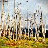 Prayers wrapped around tree branches