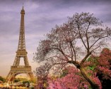 The City of Light is romantic during any time of the year, regardless of changing seasons. But during spring time, the flowers bloom, transforming the entire city into pink and purple. Belle!
