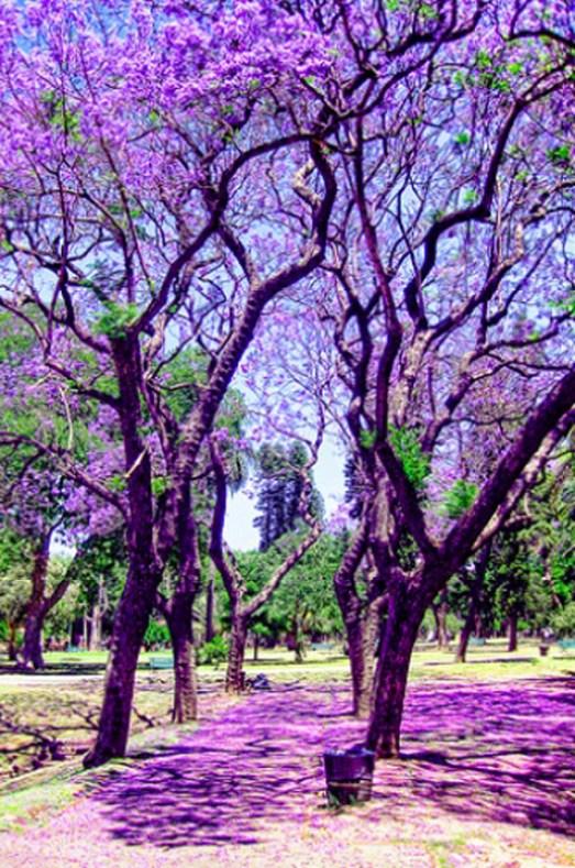 pinterest Buenos Aires spring Argentina