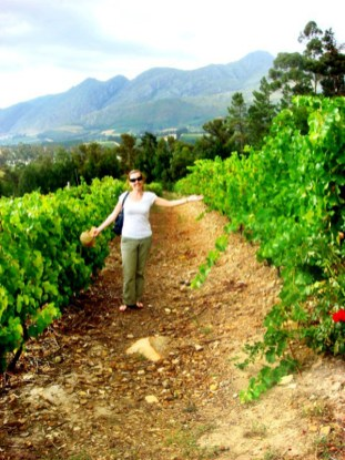 With intense sunlight and dry heat, South African wines are world renowned