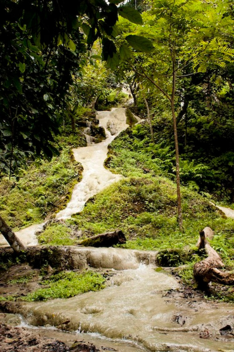 Bua Tong Chiang Mai Thailand