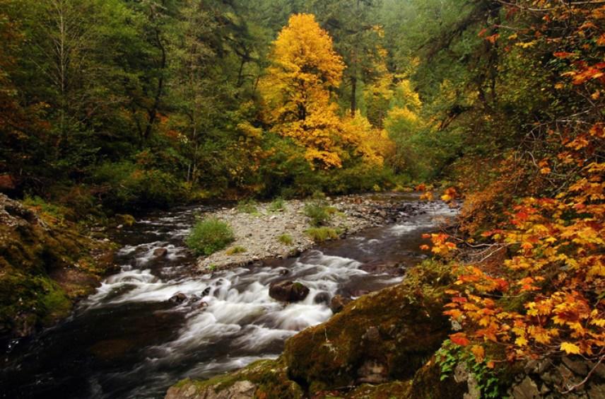 Oregon Fall Foliage Facebook water