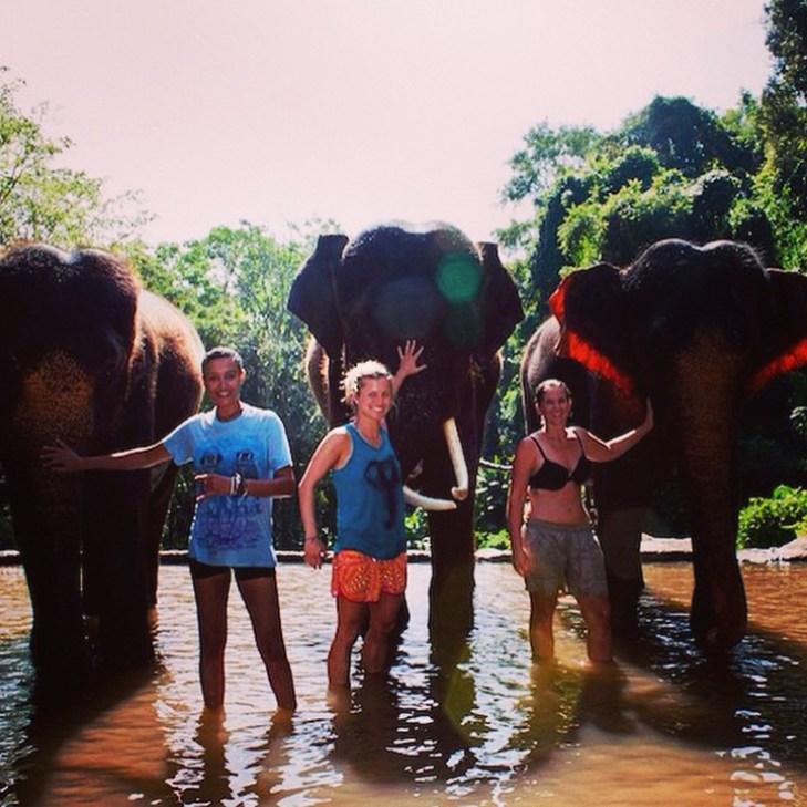 Elephant trekking Chiangmai Thailand 1