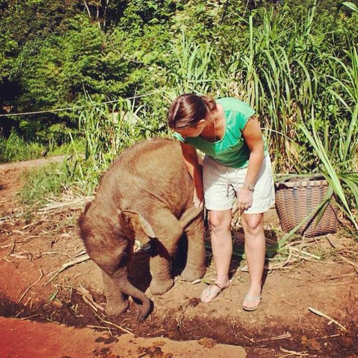 Elephant trekking Chiangmai Thailand