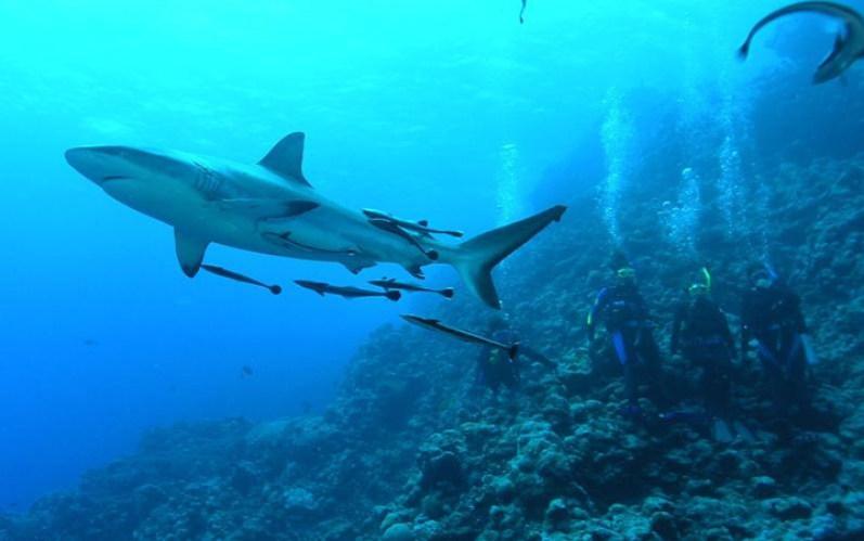www.gobroadreach.com shark camp fiji