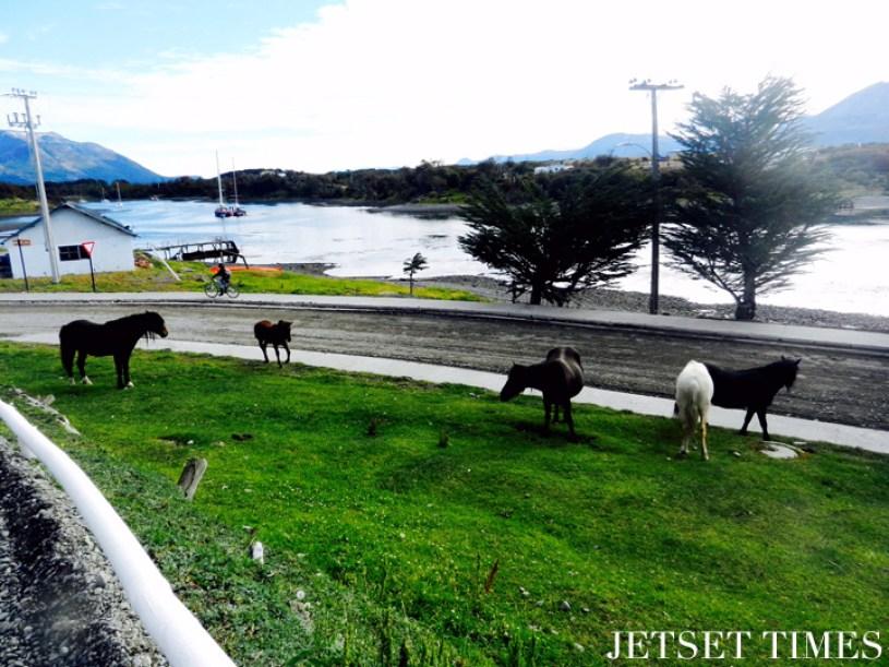 Puerto Williams Chile 8
