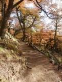 Trail to Lago de los Tres