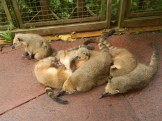 Family of Oppossums taking a much needed siesta