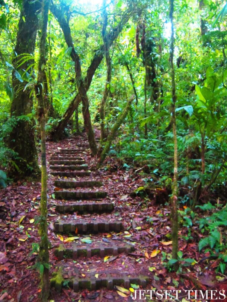 Monteverde, Costa Rica forest