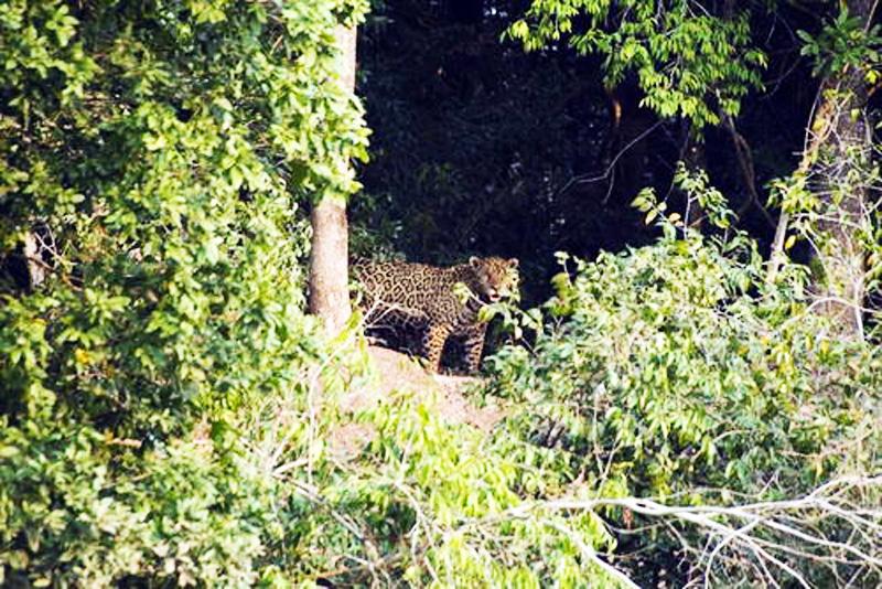 2-the-pantanal