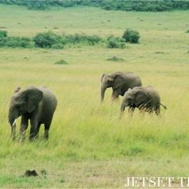 Kenya/Jetset Times