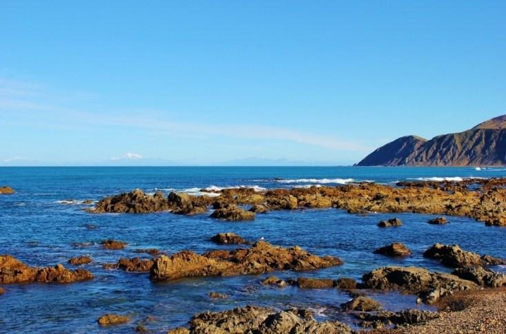 Red Rocks Coastal Path, Wellington, NZ