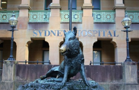 Good Luck boar statue at historic Sydney Hospital in Sydney, Australia