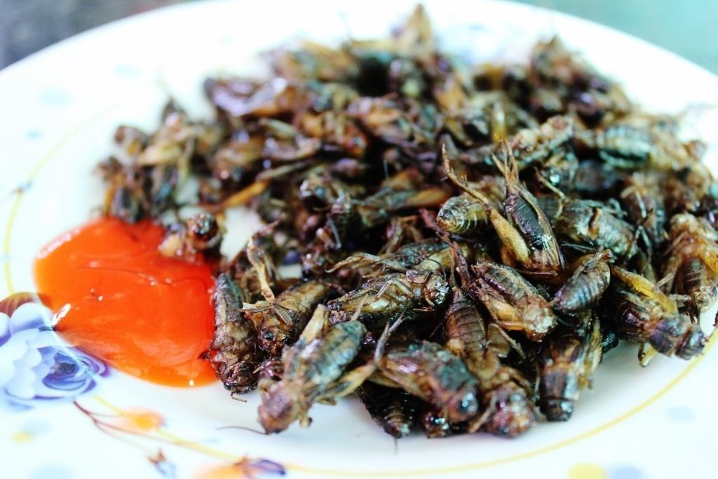 Vietnam Fried crickets...yum!